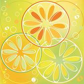 Citrus — Stock Vector