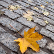 Yellow leaf on the autumn cobblestone — Stock Photo