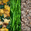Stock Photo: Collage of five autumn backgrounds
