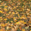 Stock Photo: Autumn yellow leaves on green grass