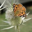 Orange butterfly — Stockfoto