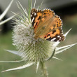 Foto Stock: Orange butterfly