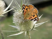 Orange Schmetterling — Stockfoto