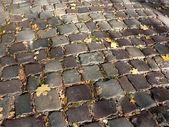 Herfst geplaveide — Stockfoto