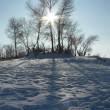 Stock Photo: Bright sun in winter day