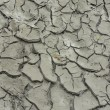 Dry crannied soil background — Stock Photo