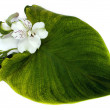 Stock Photo: Tender orchid with green leaf