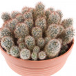 Royalty-Free Stock Photo: Cactus