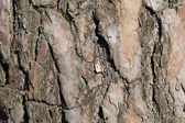 Tree background — Stock Photo