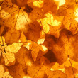 Royalty-Free Stock Photo: Maple leaves