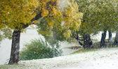 Willows in autumn — Stock Photo