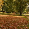 Foliage in the Hide Park.London — Stock fotografie