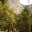 Pines and mountains in Yosemite — Stock Photo #1103540