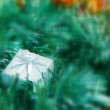 Christmas decoration in green color — Stock Photo #1490296