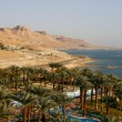 Oasis in Dead Sea - Stock Photo