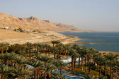 Oasis in Dead Sea — Stock Photo
