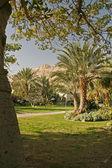 Oásis no deserto de yehuda — Fotografia Stock