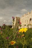 весенние цветы возле руин — Стоковое фото