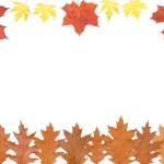 Autumn leaves — Stock Photo #1010877