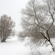 Drawing of winter — Stock Photo #1011413
