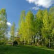 Stock Photo: Rural landscape with birches