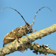 Stock Photo: Beetle on dry branch