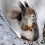 The squirrel. — Stock Photo