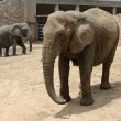 Elephant — Stock Photo #1024662