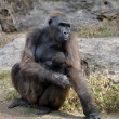 Gorillas - Photo