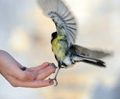 Titmouse on a hand. — Stock Photo