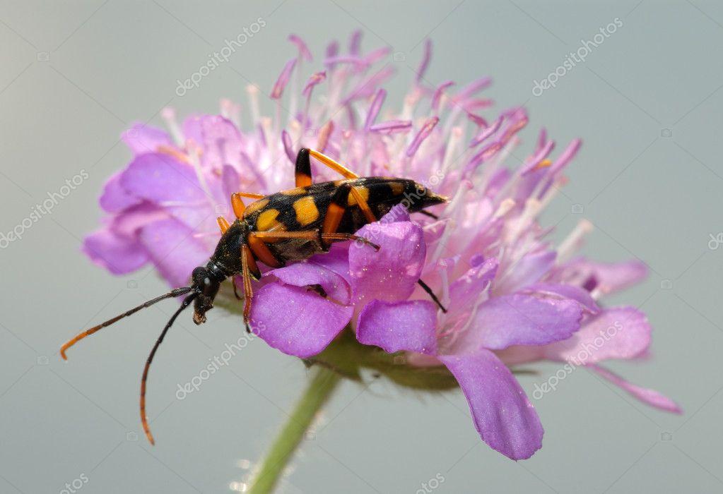 Жуки на цветах фото