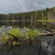 Wood lake - Photo