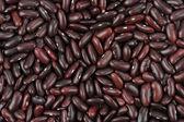 红豆 — 图库照片