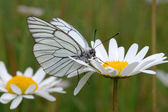 Butterfly on a flower. — Stock Photo