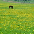 The horse on flowering spring pasture - Stock Photo