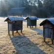 Stock Photo: Country apiary in early spring