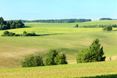 Field in early summer — Stock Photo