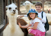 Children and animals in the zoo — Stock Photo