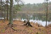 Hösten på sjön skog. — Stockfoto