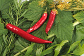 Red and green spices background. — Stock Photo