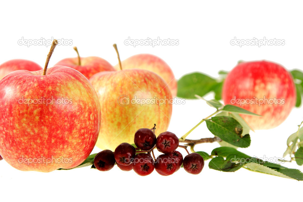 Still-life with red-yellow apples and ashberry on white background. Focus located where it works best. Close-up. — Stock Photo #1008724