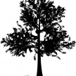 Tree silhouette. — Stock Vector