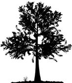 Tree silhouette. — Vector de stock