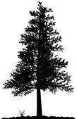 Tree silhouette. — Stock Vector