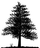High detailed tree silhouette on white b — Stok Vektör