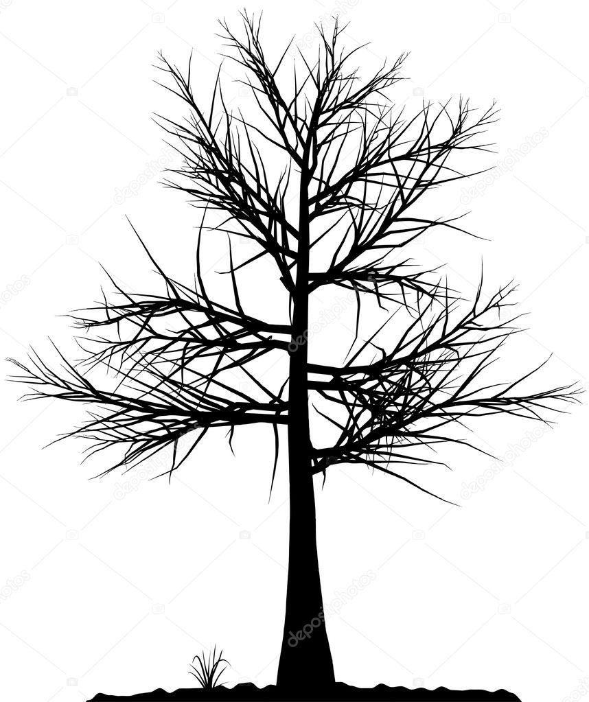 High detailed tree silhouette on white background. Black-And-White contour for your design. Vector illustration. — Stock Vector #1010214