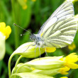 Butterfly — Stock Photo #1010628