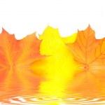 Isolated autumn leaves — Stock Photo