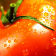One tomato — Stock Photo #1011312