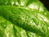 Green sheet background with raindrops — Stock Photo